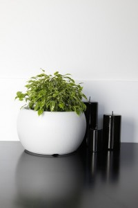 roślina w łazience
