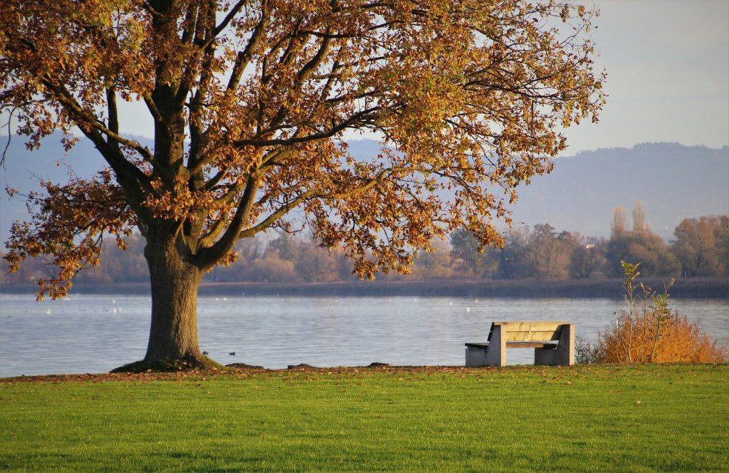 Ławka i jezioro